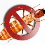 Obat Anti Rayap Terbaik untuk Proteksi Maksimal