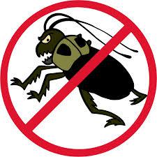 Gunakan anti serangga yang bagus untuk membasmi serangan hewan ini.