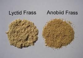 Perbedaan kumbang bubuk yang asli dan palsu (Lyctid dan Anobiid) bisa dilihat dari bubuknya.